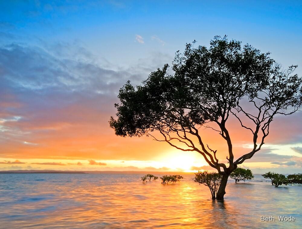 Mangrove Morning - Cleveland Qld Australia by Beth  Wode