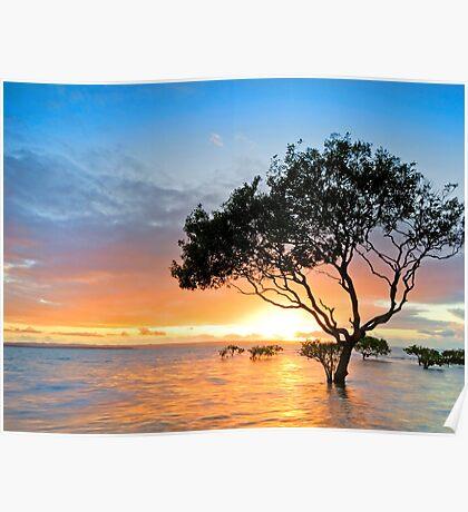 Mangrove Morning - Cleveland Qld Australia Poster