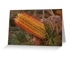 Banksia menziesii, WA Greeting Card