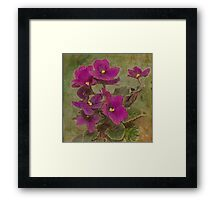 Purple African Violet Framed Print