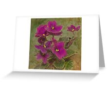 Purple African Violet Greeting Card