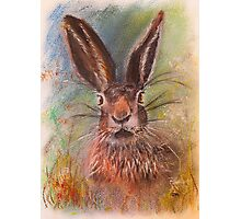 Hare (Jack Rabbit) in The Grass Photographic Print
