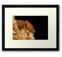 Intrepid Adventurer Framed Print