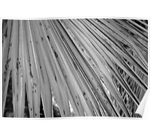 Palm Leaf in Black and White Poster