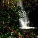 Akaka falls trail II by PJS15204