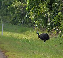 Cassowary Crossing near Tully by STHogan