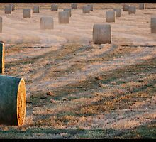 Rolling Hay Bales At Dawn!  by Anna Ryan