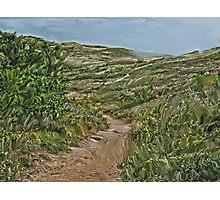 Dune Trail Photographic Print