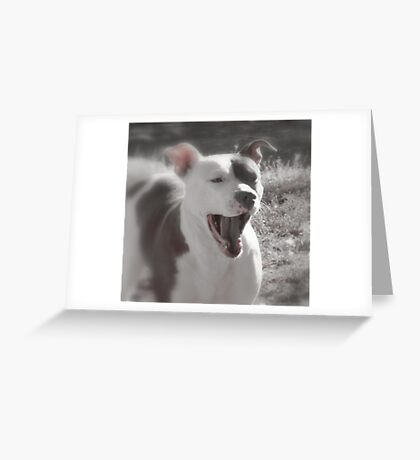 Good Afternoon Yawn and Stretch....! Greeting Card