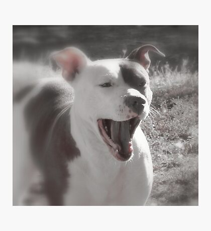 Good Afternoon Yawn and Stretch....! Photographic Print