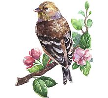 Watercolour Bird by alee7spain