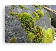 Green moss on stone boho nature woodland forest fantasy organic medieval autumn Canvas Print