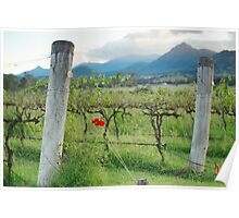 Vineyard in Kooroomba  Poster