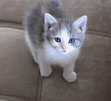 Blue Eyes by Brenda Dahl
