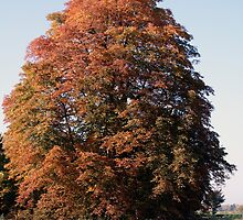 Autumn Tree by Stefanie Köppler