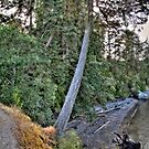 East Sooke Park (360 Panorama HDR) by James Zickmantel