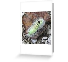 Caterpillar of Pale Tussock (Calliteara pudibunda) Greeting Card