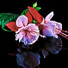 Fuchsias XXX by Tom Newman