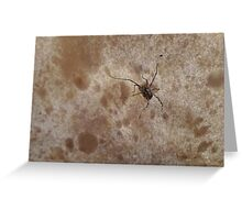 Tiny Spider on Mushroom Greeting Card