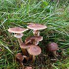 Mushrooms by SophiaDeLuna