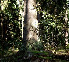 Forest Scenery by SophiaDeLuna
