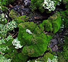 Lichen and Moss on Tree Trunk by SophiaDeLuna