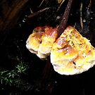 Colourful Mushroom on Dead Wood by SophiaDeLuna