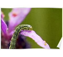 Insect World Poster
