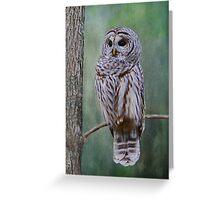 Barrred Owl Greeting Card