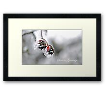 Frosted Berry Christmas Framed Print
