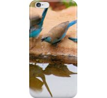 THIRSTY -  BLUE WAXBILL – Uraeginthus angolensis iPhone Case/Skin