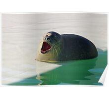 Yawning Seal  Poster