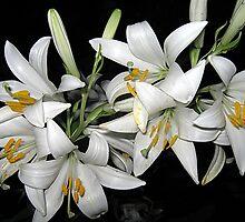 Fragrant flowers by Ana Belaj