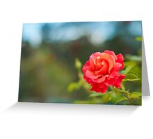 Firestar Rose Greeting Card