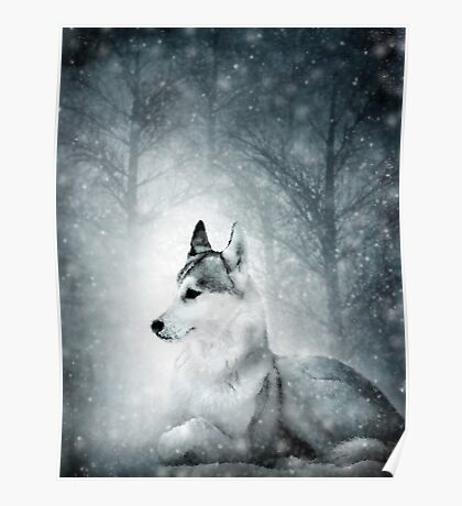Snow Wolf Poster