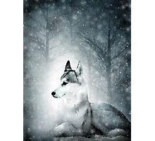 Snow Wolf Photographic Print