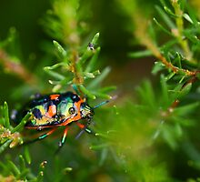 Some Colour In The Rain by Josie Eldred