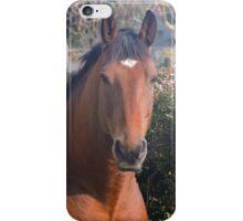 Henri the horse iPhone Case/Skin