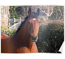Henri the horse Poster