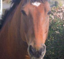 Henri the horse Sticker