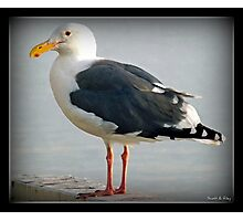 The Sea Gull By The Bay Photographic Print