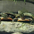 TURTLE LOVE by Jeanette Muhr
