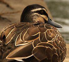 Fat Duck by Emma Holmes