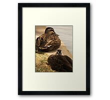 Hide-My-Bill Duck Framed Print