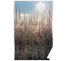 Frosty Morning - Colour 4, Dunrobin Ontario Poster