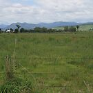 Blenheim Countryside by aussiebushstick