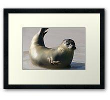 Waving seal Framed Print