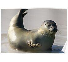Waving seal Poster