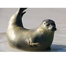 Waving seal Photographic Print
