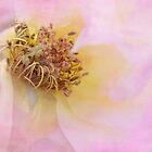 faded beauty by Teresa Pople
